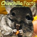 ChinchillaFactsSite