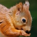 georgiasquirrel
